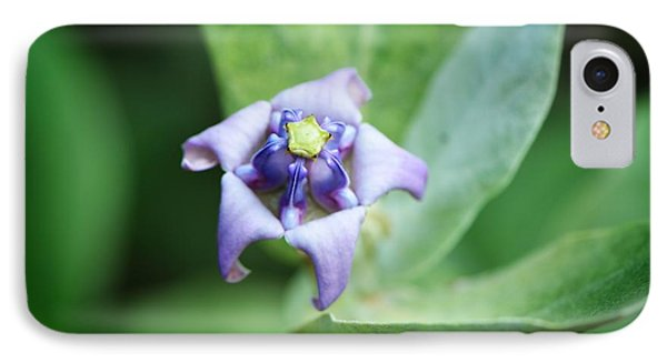 Botanical Art Print - Star Of The Garden - By Sharon Cummings IPhone Case by Sharon Cummings