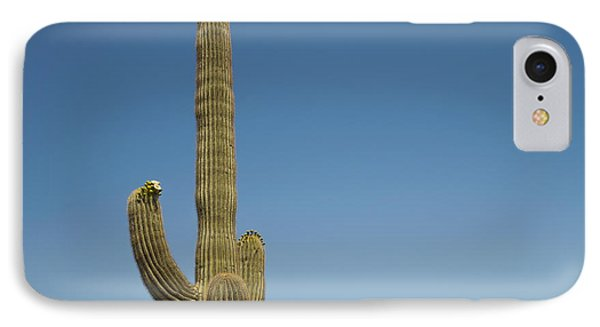 Saguaro Cactus In Bloom IPhone Case by Marianne Campolongo