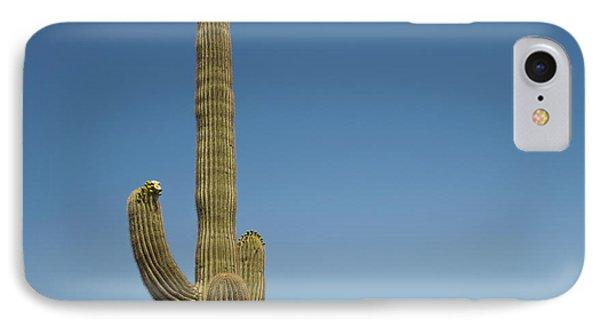 Saguaro Cactus In Bloom IPhone Case