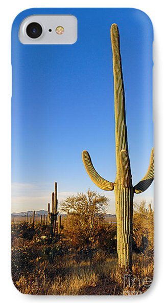 Saguaro Cactus Sunrise At Saguaro National Park IPhone Case by Jamie Pham