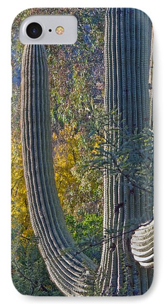 Saguaro Fall Color IPhone Case by Tam Ryan