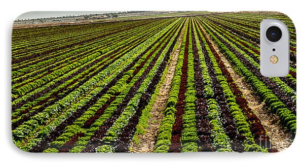 Salad Bowl Lettuce IPhone Case by Robert Bales