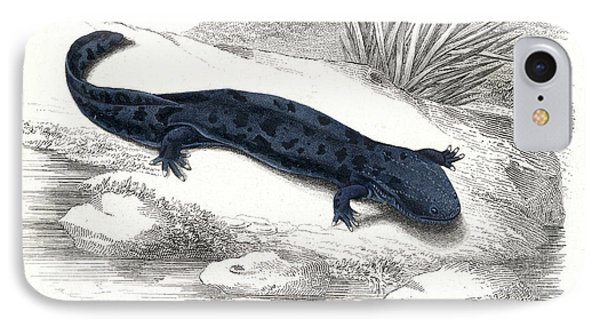 Salamanders iPhone 7 Case - Salamander by Collection Abecasis