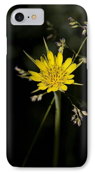 Salsify And Grass IPhone Case by Morris  McClung