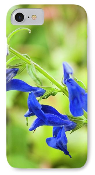 Salvia Patens 'blue Angel' IPhone Case by Adrian Thomas