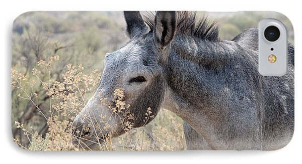 Sam The Burro IPhone Case by Lula Adams