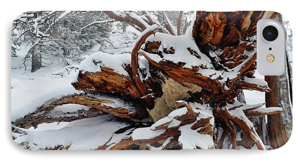IPhone Case featuring the photograph San Jacinto Fallen Tree by Kyle Hanson