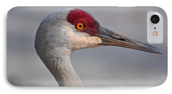 IPhone Case featuring the photograph Sand Hill Crane Portrait by Sabine Edrissi
