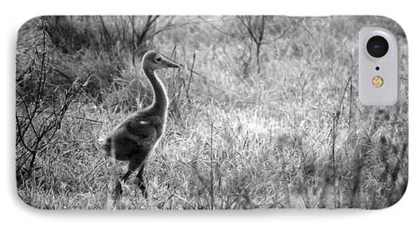 Sandhill Chick In The Marsh - Black And White Phone Case by Carol Groenen
