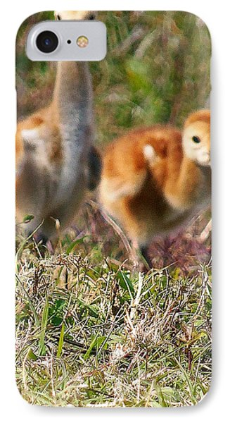 IPhone Case featuring the photograph Sandhill Chicks by Chris Mercer