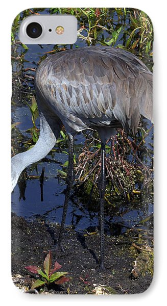 Sandhill Crane 035 IPhone Case by Chris Mercer