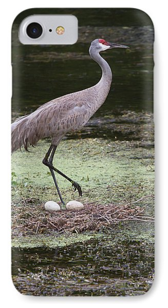 IPhone Case featuring the photograph Sandhill Crane And Eggs by Paul Rebmann