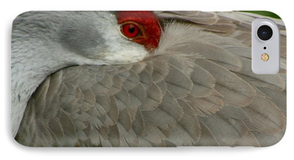 IPhone Case featuring the photograph Sandhill Crane At Rest by Myrna Bradshaw