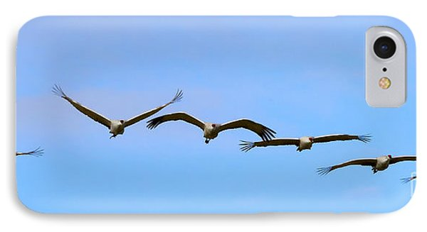 Sandhill Crane Flight Pattern IPhone Case by Mike Dawson