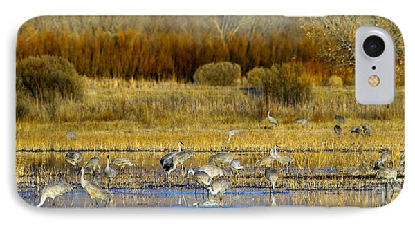 Sandhill Flock In Fall IPhone Case by Martha Marks