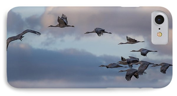 IPhone Case featuring the photograph Sandhill Cranes by Beverly Parks