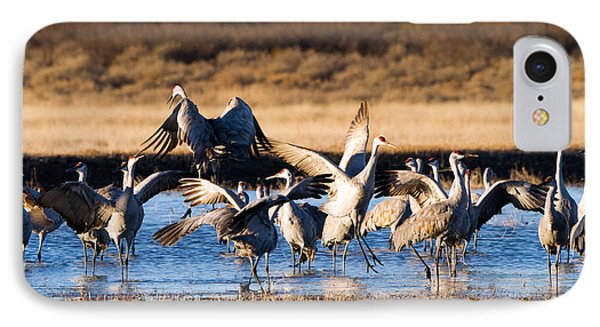 Cranes Dance For Joy IPhone Case by Martha Marks