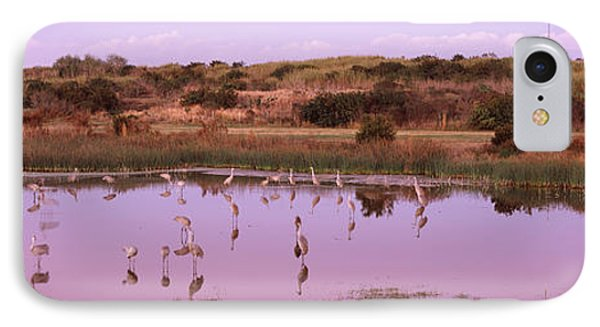 Sandhill Cranes Grus Canadensis IPhone Case by Panoramic Images