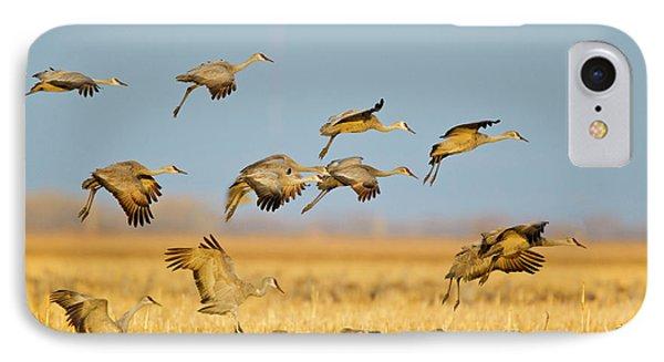 Sandhill Cranes Land In Corn Fields IPhone Case