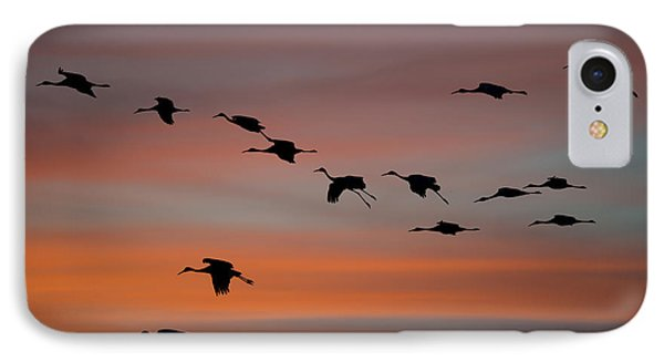 Sandhill Cranes Landing At Sunset IPhone Case by Avian Resources