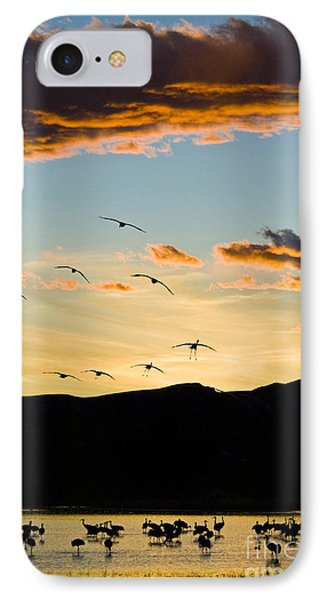 Sandhill Cranes In New Mexico Phone Case by William H Mullins