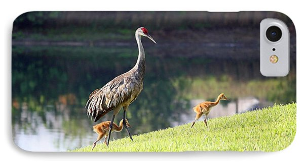 Sandhill Family Outing IPhone Case by Carol Groenen