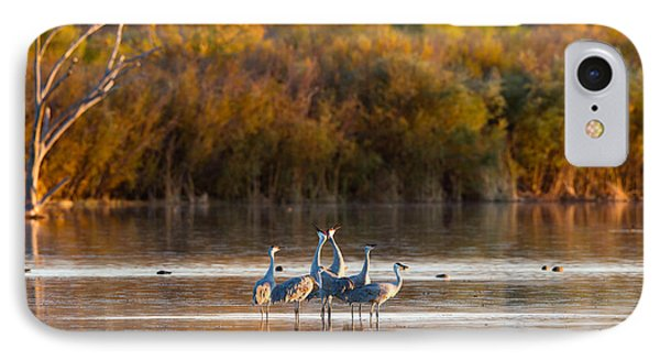 Six Sandhill Cranes IPhone Case by Martha Marks