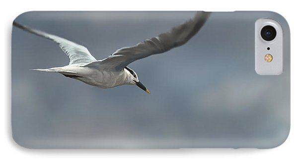 Sandwich Tern Phone Case by Aaron Blaise