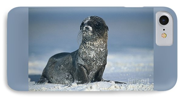 IPhone Case featuring the photograph Sandy Sea Lion by Chris Scroggins