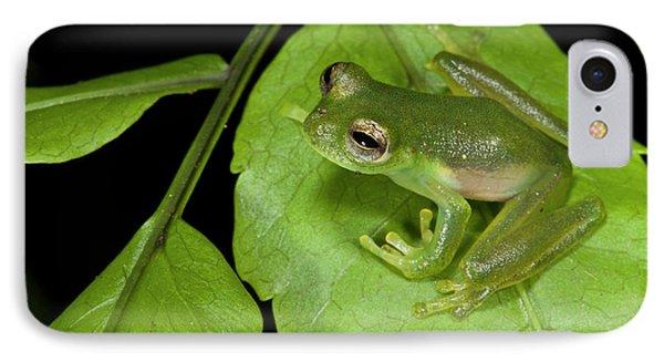 Santa Cecilia Glass Frog (cochranella IPhone Case by Pete Oxford
