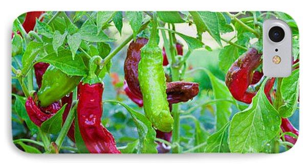Santa Fe Grande Hot Peppers On Bush IPhone Case