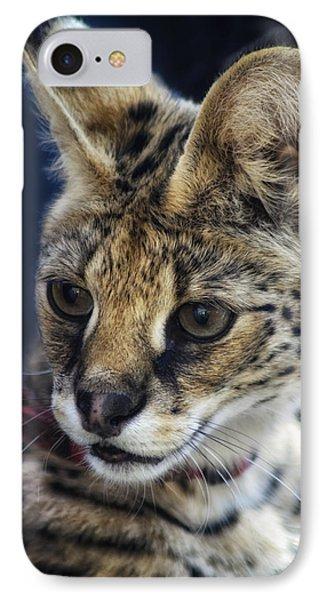 Savannah Jungle Cat IPhone Case