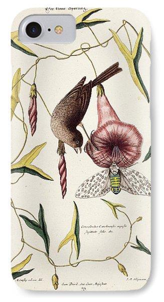 Savannah Sparrow And Cicada IPhone Case by Paul D Stewart