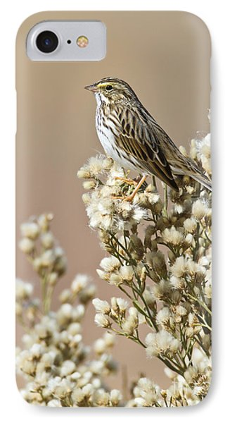 IPhone Case featuring the photograph Savannah Sparrow by Bryan Keil