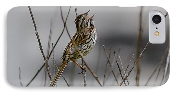 Savannah Sparrow IPhone Case by Marty Saccone