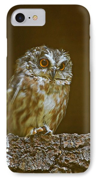 Saw-whet Owl IPhone Case