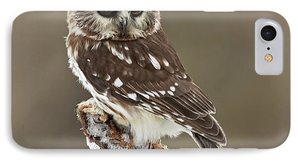 Saw Whet Owl Sleeping In A Winter Forest Phone Case by Inspired Nature Photography Fine Art Photography