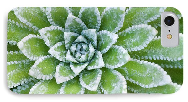 Saxifraga 'esther' Leaves Abstract IPhone Case