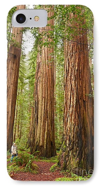 Scale - The Beautiful And Massive Giant Redwoods Sequoia Sempervirens In Redwood National Park. IPhone Case