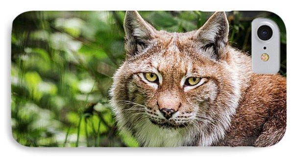 Scandinavian Lynx IPhone Case by Paul Williams
