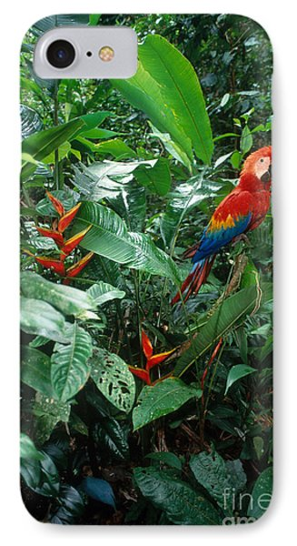 Scarlet Macaw IPhone Case by Art Wolfe