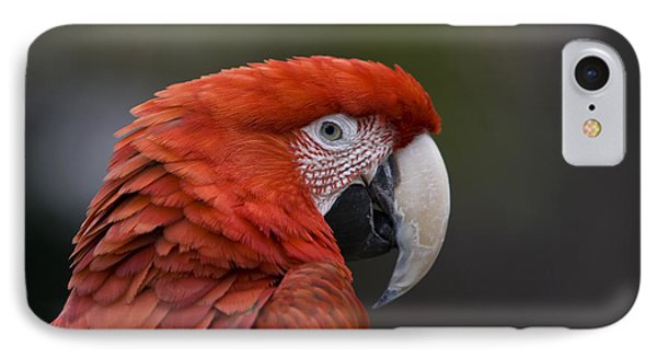 Scarlet Macaw IPhone Case by David Millenheft