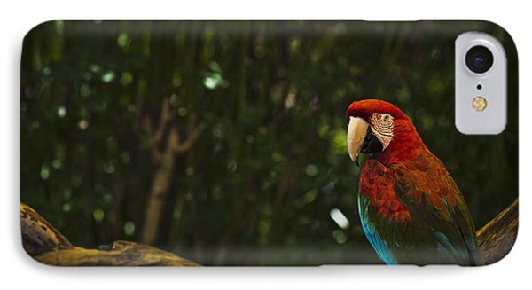 Scarlet Macaw Profile IPhone Case by Bradley R Youngberg
