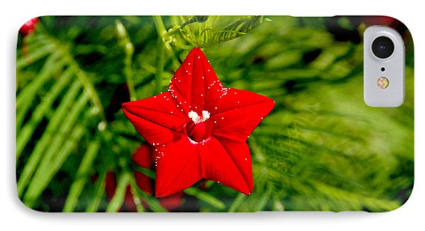 IPhone Case featuring the photograph Scarlet Morning Glory - Horizontal by Ramabhadran Thirupattur