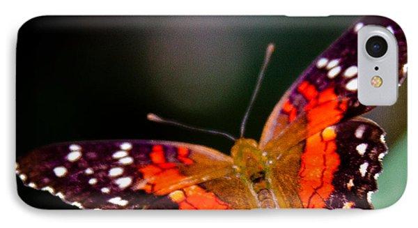 Scarlet Peacock Butterfly - Anartia Amathea IPhone Case