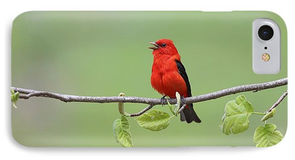 Scarlet Tanager IPhone Case by Daniel Behm