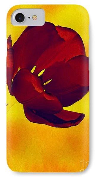 Scarlet Tulip At Sunset IPhone Case