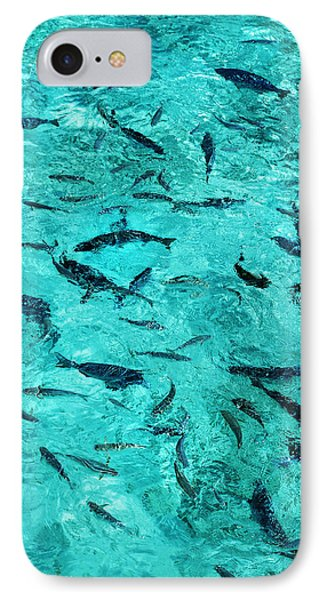School Of Fishes In The Transparent Water IPhone Case