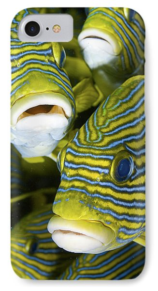 Schooling Sweetlip Fish, Raja Ampat IPhone Case by Jaynes Gallery