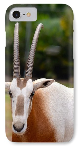 Scimitar Horned Oryx 2 Phone Case by Richard Bryce and Family